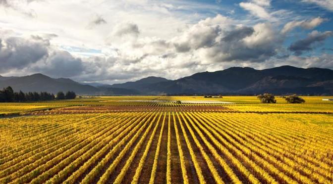 Weinregion Neuseeland